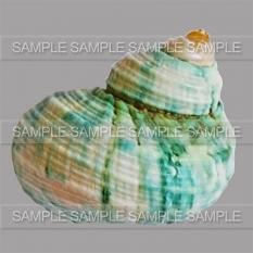 Shells pack by Graphia Bella