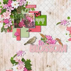 To Blossom Layout