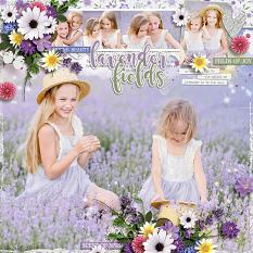 Fields of Lavender Layout