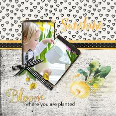 Layout by Judy Webster