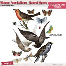Vintage Page Builders - Natural History by Jan Ransley