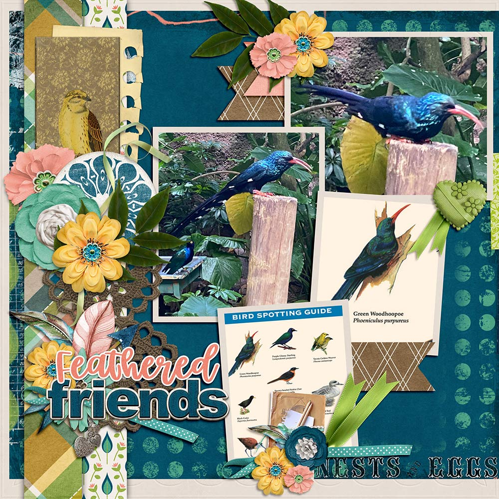 CT Layout using Aviary by Connie Prince