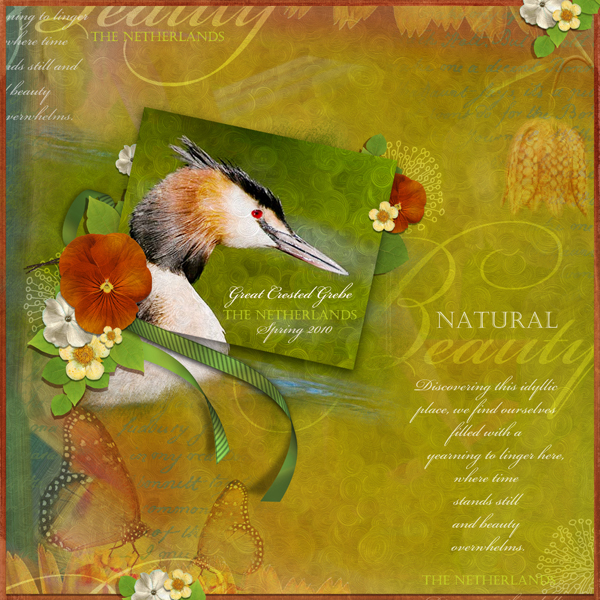 Great Crested Grebe layout by Brandy Murry. See below for links to all products used in this digital scrapbooking layout.