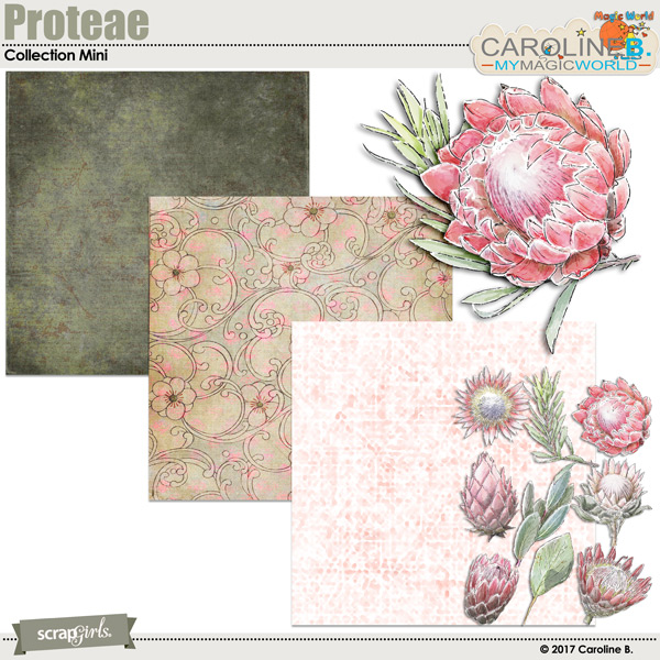 Proteae Collection Super Mini by Caroline B.