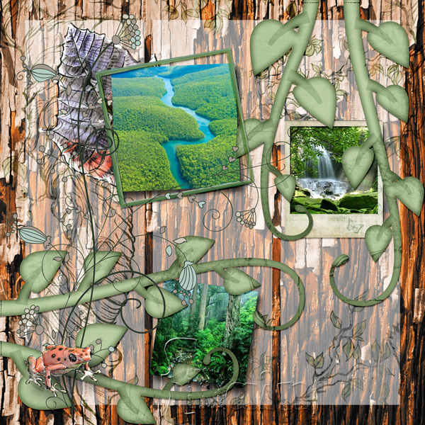 LO using Rain Forest Collection by Caroline B.